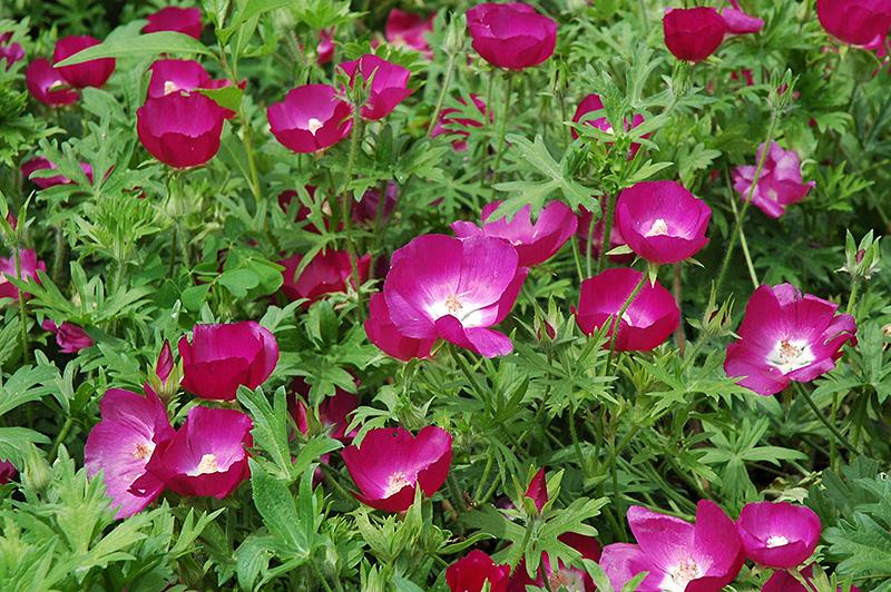 libertyville waukegan mundelein illinois il at pasquesi home gardens - Pasquesi Home And Garden